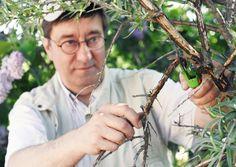 Kasvitaudit, tuholaiset ja rikkaruohot on syytä torjua ajoissa. Luonnonmukainen kasvinsuojelu auttaa vaurioiden ennaltaehkäisyssä. Katso Viherpihan vinkit! Holding Hands