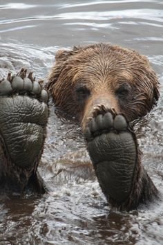 Grizzly Bear Feet by Rose Smith