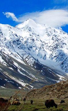 Yaks in the Pamir Mountains by Sputnikboy / 500px (Tajikistan)