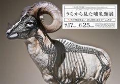 Composition of Mammals by Wataru Yoshida.