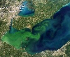 An Algal Bloom for the Record Books. Algae blooms on a mammoth scale. Have you had one recently in your tank?