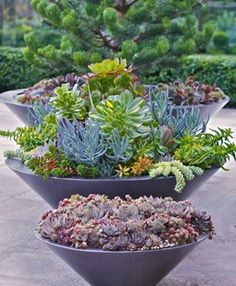 Succulent Container Gardens, Container Grouping Pot Incorporated Vancouver, BC