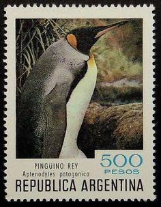 Argentina - Pinguino Rey