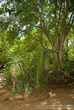 KNP - Letaba - General Camping, Park, Plants, Campsite, Parks, Planters, Outdoor Camping, Plant, Planting