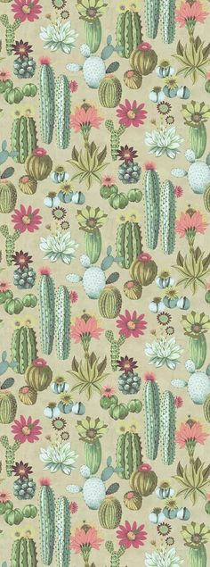 Cactus Mural by Eijffinger - Multi - Mural : Wallpaper Direct - Wallpaper - Cactus Mural Multi mural by Eijffinger You are in the right place about cactus wallpaper Here we of - Cactus Wallpaper, Cactus Backgrounds, Cute Wallpaper Backgrounds, Pretty Wallpapers, Wall Wallpaper, Iphone Wallpaper, Image Cactus, Cactus Images, Illustration Cactus