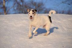 Maailman paras koira! <3 Husky, Dogs, Animals, Animales, Animaux, Pet Dogs, Doggies, Animal, Animais