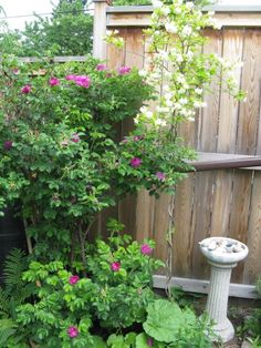 Companion Plants For Jasmine: What Grows Well With Jasmine Plants
