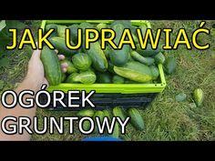 Celery, Gardening Tips, Cucumber, Vegetables, Youtube, Garden, Vegetable Recipes, Veggies, Youtubers