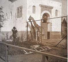 Jaula de la jirafa en el Zoo by jdelgadomonteiro, via Flickr