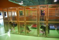 to Prepare Your Dog For Boarding Beautiful runs - classy, easy to clean, and not completely glass to give the dogs privacy from one another. Dog Boarding Kennels, Pet Boarding, Dog Kennels, Boarding House, Pet Shop, Dog Kennel Designs, Kennel Ideas, Parks, Pet Hotel