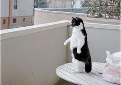 猫画像|ペンギンの疑いのある猫 part.1                                                                                                                                                                                 もっと見る