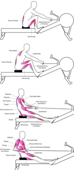 the muscles activated by the rowing machine