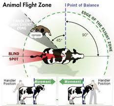 Animal flight zone