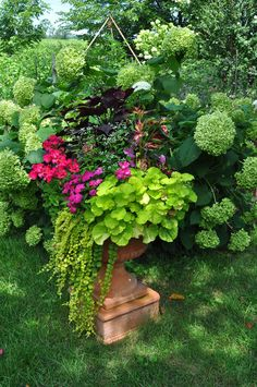 """This dramatic terra cotta urn features a chartreuse leaved fancy geranium in front and a magenta flowered zonal geranium in the back combined with """"Creeping Jenny,"""" Euphorbia """"Diamond Frost,"""", and two types of Coleus and New Guinea Impatiens."""