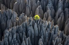 Tsingy of Bemaraha, Morondava region, Madagascar. A Nature reserve covering 853 square kilometers, it was established as a UNESCO World Heritage site in 1990
