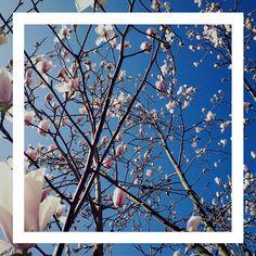 Montreux is in bloom // Montreux est en fleur