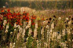 Hauser Wirth borders Somerset Lisa Cox Garden Designs
