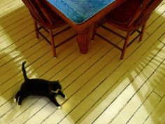 Prudence and the blue topped table by lauraxfire, via Flickr