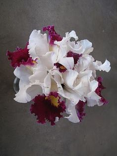 Orchids of white and red by oldrose Orchid Bouquet Wedding, Wedding Flowers, Most Beautiful Flowers, Love Flowers, Painting The Roses Red, Cattleya Orchid, Trees To Plant, Hibiscus, Flower Power
