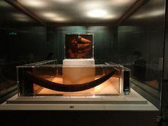 Elephant tusk Jinsha Site Museum
