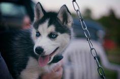 Imagen de dog, cute, and animal