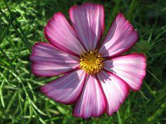 flower photo from my garden