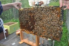 """A Bee Positive Peterborough"" by GreenUP // GreenUP's Community Beekeeping initiative plans to expand urban beekeeping in 2016."