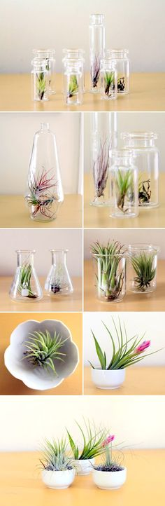 Air plants! Aka tillandsia. So funky, and so fun in these little glass terrariums, apothecary jars, beakers and bowls from Tortoise Loves Donkey | via junebugweddings.com