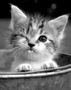 puppies and kittens / puppies and kittens . puppies and kittens together . puppies and kittens videos . puppies and kittens together so cute . puppies and kittens cute . puppies and kittens birthday party . puppies and kittens funny Cute Cats And Kittens, I Love Cats, Adorable Kittens, Cute Pets, Super Cute Kittens, Cute Baby Puppies, Kittens Cutest Baby, Super Cute Puppies, Cute Baby Cats
