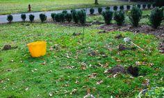 Wife, Mother, Gardener: Projects Around Havenwood