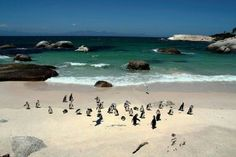 Boulders Beach in Cape Town, South Africa Places Around The World, The Places Youll Go, Places To Visit, Boulder Beach, Cape Town South Africa, Most Beautiful Beaches, Park City, Bouldering, The Great Outdoors
