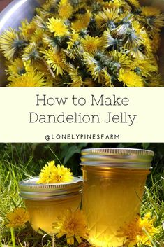 Dandelion jelly is delicate & delicious way to enjoy summer all year long. I'll walk you through making your own batch at home. Dandelion Uses, Dandelion Jelly, Dandelion Recipes, Dandelion Jam Recipe, Jelly Recipes, Jam Recipes, Canning Recipes, Canning Tips, Cooker Recipes