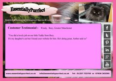 Customer Testimonial of EssentiallyPurrfect #mobile #Persian #cat #catgrooming service. Wendy #Bury #Manchester