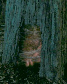 portal in the tree - Stranger Things Stranger Things Episode 6, Stranger Things Quote, Stranger Things Aesthetic, Stranger Things Season, Barbara Holland, Portal, Mind Flayer, Wattpad, View Photos