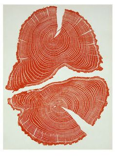 Red-Acorn - Cross-section tree print by alum Bryan Nash Gill Cross Section, Arte Sketchbook, Tree Print, Wood Print, Printmaking, Artsy, Texture, Art Prints, Artwork