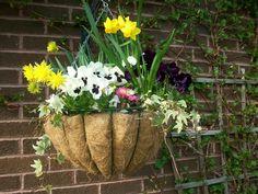 Hanging basket with pansies, daffodils Winter Garden, Pansies, Daffodils, Spring Floral Arrangements, Italian Garden, Hanging, Arrangement, Container Gardening, Hanging Baskets