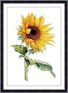 This is a print from my original watercolor painting  ♦ Sizes:  ♦ ACEO 2.5x3.5 inches ♦ 4x6 inches, (10x15 cm) leaving extra for matting ♦ 5x7 inches,