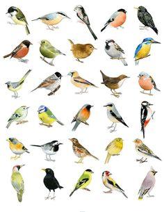 top 100 popular bird names that s cute pinterest bird pet