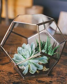 succulents planted in a cool geometric pot could look cool on the table
