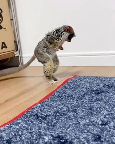 Cute Little Animals, Cute Funny Animals, Cute Cats, Funny Cats, Cute Animal Videos, Cute Animal Pictures, Cute Creatures, Cool Pets, My Animal
