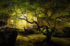 Images of the Portland Japanese Garden in spring and early summer.