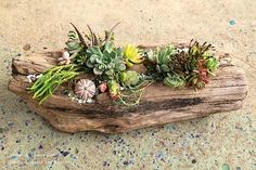 It's surprisingly easy to make a succulent driftwoodplanterthat looks professionally designed. Driftwood pieces (from Sea Foam Driftwood) come with pre-drilled crevices for potting. Materials include small potted succulents, cuttings, sea shells, bits of tumbled glass, moss, rocks and sand.