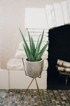 John and Lindsay painted the fireplace black and the surrounding bricks white when they moved in. The plant stand is a vintage favorite from Forage Modern Workshop.