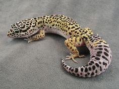 170 Idées De Serpents Et Autres Reptiles Animaux Reptiles Amphibiens