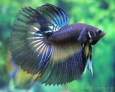 beautiful fish