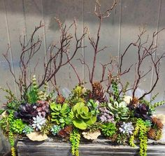 Beautiful succulent arrangement by Richard Dennis