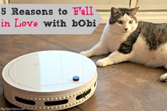 I finally had some real help around the house without actually hiring help! I am going to give you 5 reasons to fall in love with bObi and trust me, you will! http://www.my3littlekittens.com/5-reasons-to-fall-in-love-with-bobi/