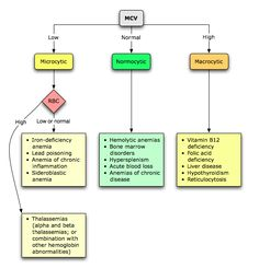 Preliminary Analysis of Anemias Using a Morphologic Approach
