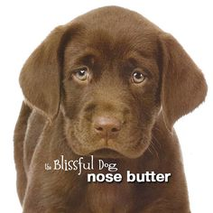 Chocolate Lab Label...Nose Butter for Labrador Retriever Dogs 2 oz for by TheBlissfulDog, $11.50