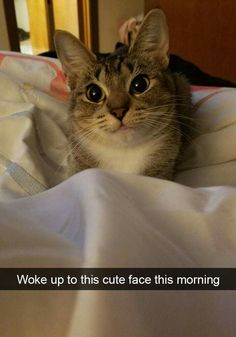 I think my cat Lilly will look like her when she is fully grown